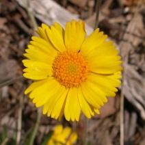 daisy pic